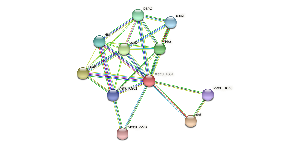 Mettu_1831 protein (Methylobacter tundripaludum) - STRING interaction network