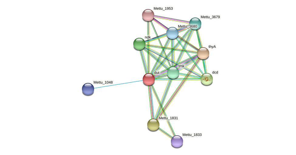 Mettu_1832 protein (Methylobacter tundripaludum) - STRING interaction network