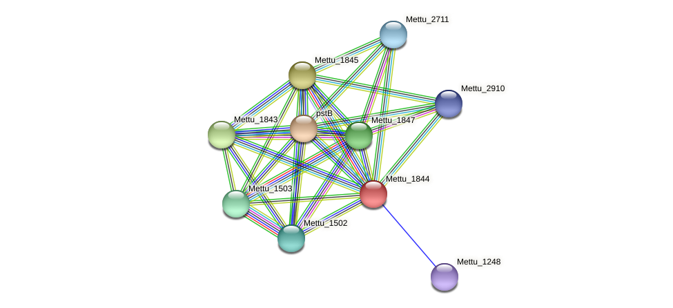 Mettu_1844 protein (Methylobacter tundripaludum) - STRING interaction network