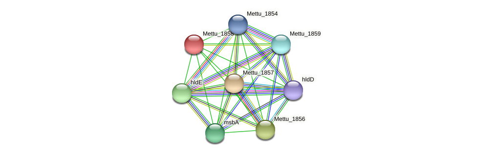 Mettu_1858 protein (Methylobacter tundripaludum) - STRING interaction network