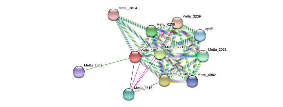 Mettu_1863 protein (Methylobacter tundripaludum) - STRING interaction network