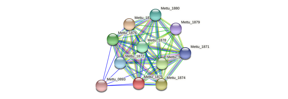 Mettu_1875 protein (Methylobacter tundripaludum) - STRING interaction network