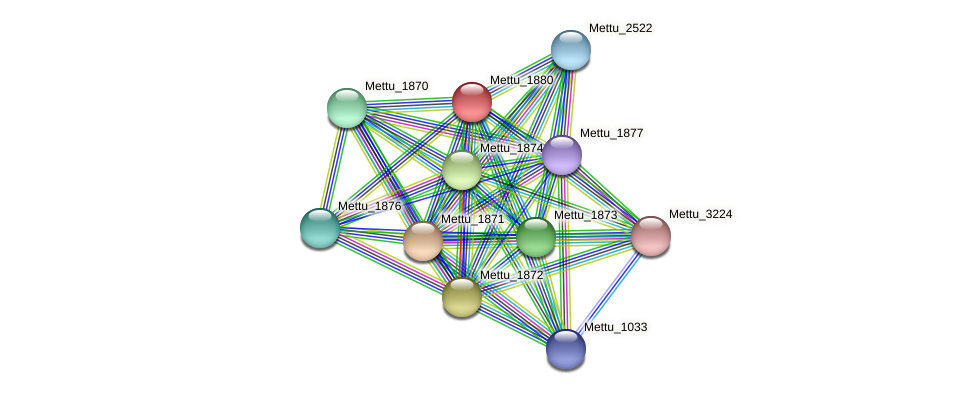 Mettu_1880 protein (Methylobacter tundripaludum) - STRING interaction network