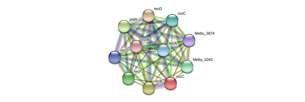 recC protein (Methylobacter tundripaludum) - STRING interaction network