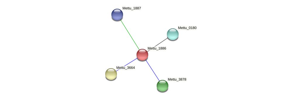 Mettu_1886 protein (Methylobacter tundripaludum) - STRING interaction network