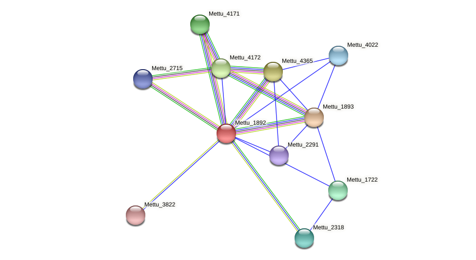 Mettu_1892 protein (Methylobacter tundripaludum) - STRING interaction network