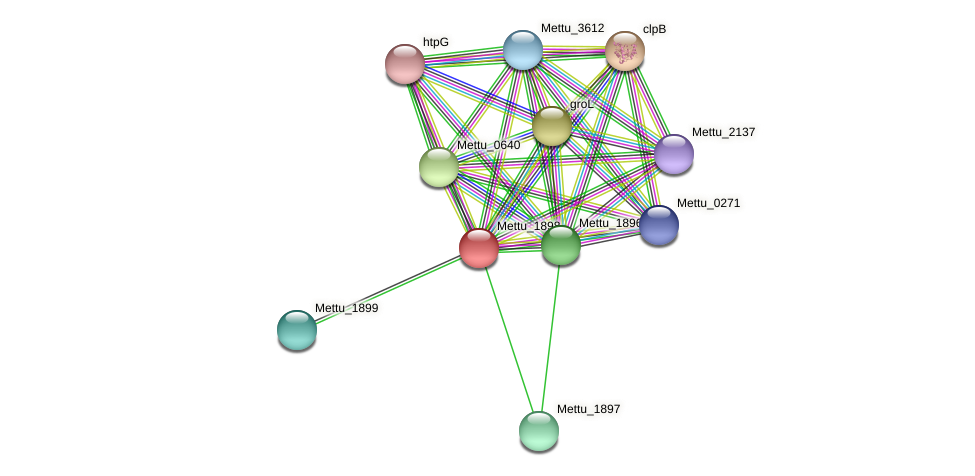 Mettu_1898 protein (Methylobacter tundripaludum) - STRING interaction network