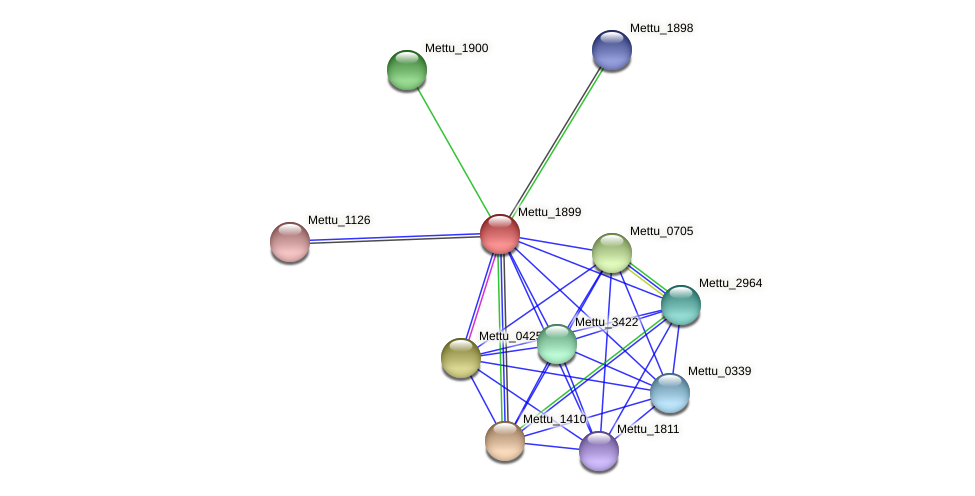 Mettu_1899 protein (Methylobacter tundripaludum) - STRING interaction network