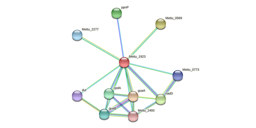 Mettu_1923 protein (Methylobacter tundripaludum) - STRING interaction network