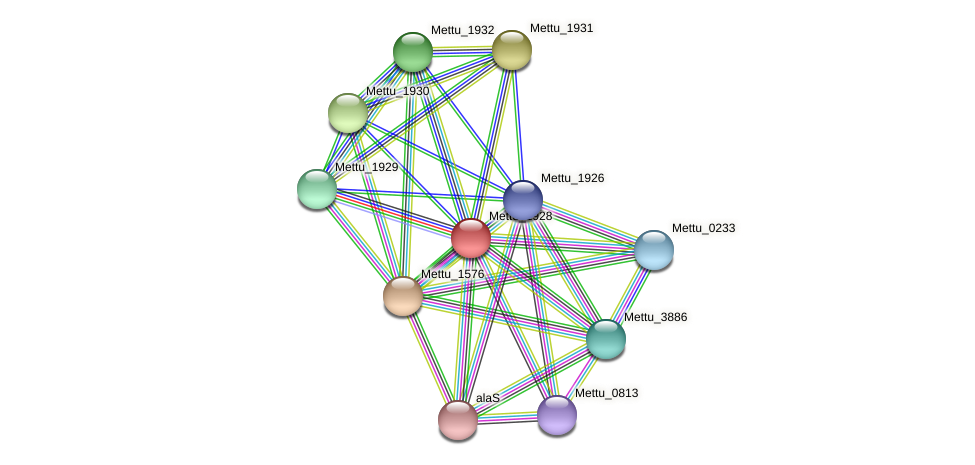 Mettu_1928 protein (Methylobacter tundripaludum) - STRING interaction network