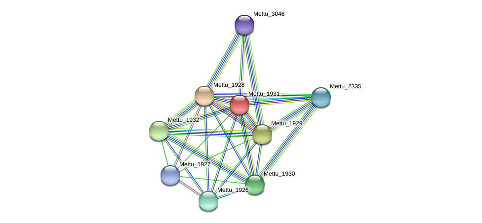 Mettu_1931 protein (Methylobacter tundripaludum) - STRING interaction network