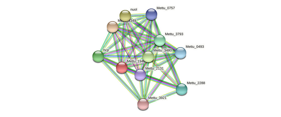 Mettu_1940 protein (Methylobacter tundripaludum) - STRING interaction network