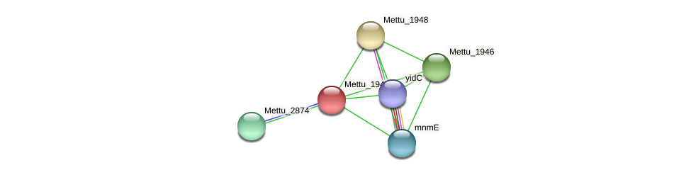 Mettu_1947 protein (Methylobacter tundripaludum) - STRING interaction network