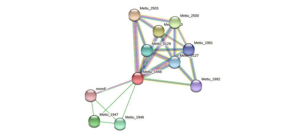 Mettu_1948 protein (Methylobacter tundripaludum) - STRING interaction network