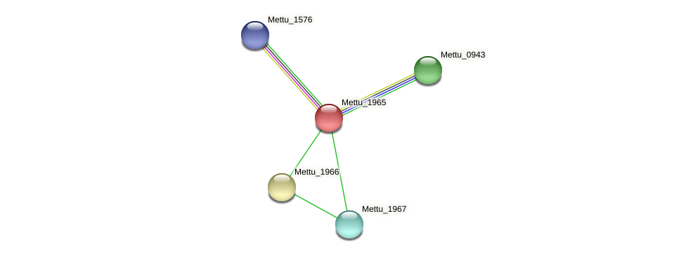 Mettu_1965 protein (Methylobacter tundripaludum) - STRING interaction network