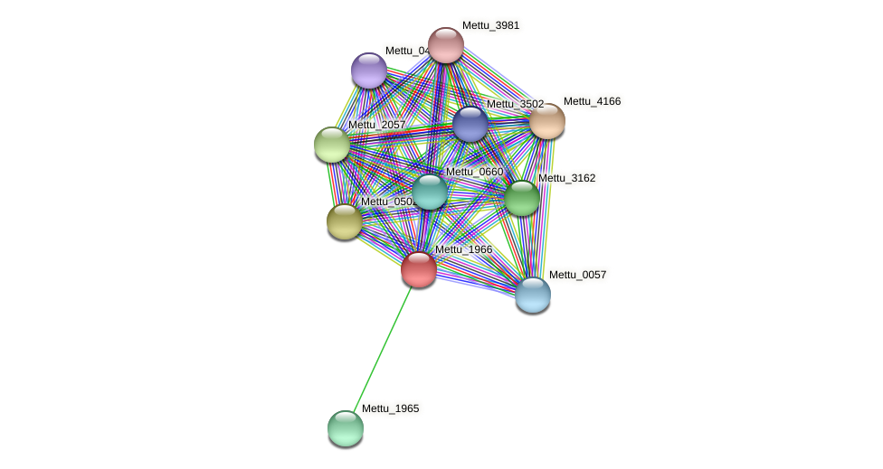 Mettu_1966 protein (Methylobacter tundripaludum) - STRING interaction network