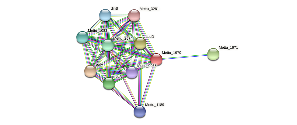 Mettu_1970 protein (Methylobacter tundripaludum) - STRING interaction network