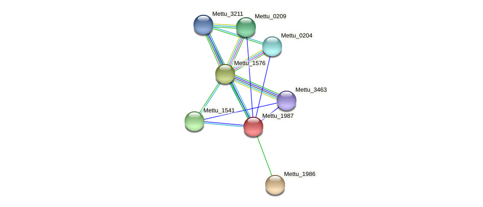 Mettu_1987 protein (Methylobacter tundripaludum) - STRING interaction network