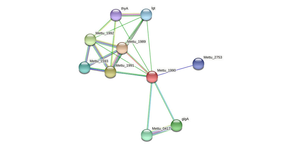 Mettu_1990 protein (Methylobacter tundripaludum) - STRING interaction network
