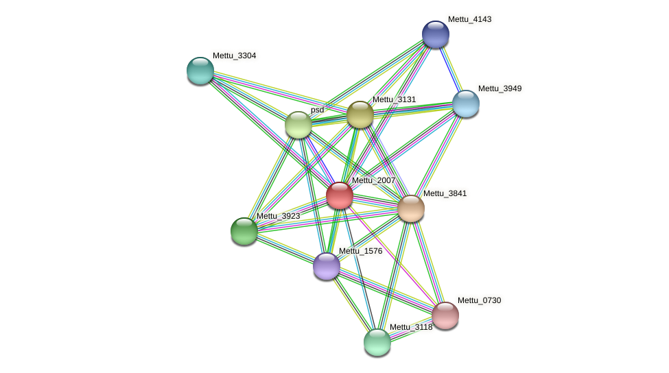 Mettu_2007 protein (Methylobacter tundripaludum) - STRING interaction network