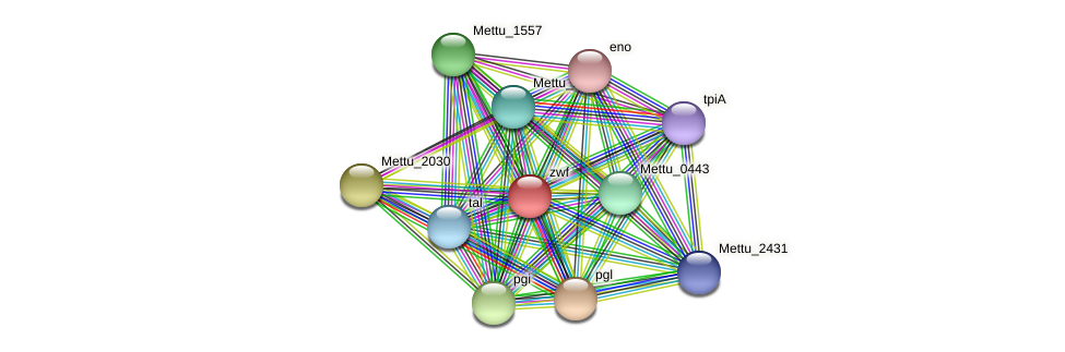 Mettu_2029 protein (Methylobacter tundripaludum) - STRING interaction network