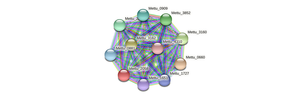 Mettu_2058 protein (Methylobacter tundripaludum) - STRING interaction network