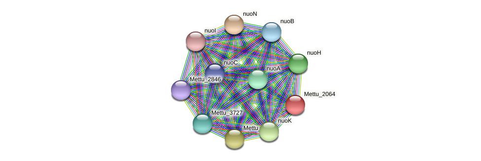 Mettu_2064 protein (Methylobacter tundripaludum) - STRING interaction network