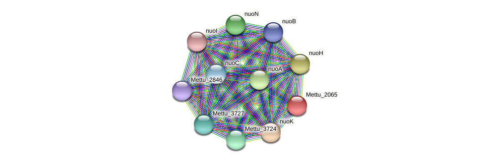 Mettu_2065 protein (Methylobacter tundripaludum) - STRING interaction network