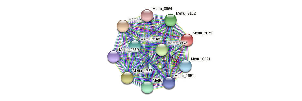 Mettu_2075 protein (Methylobacter tundripaludum) - STRING interaction network