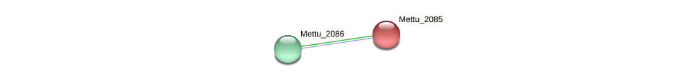 Mettu_2085 protein (Methylobacter tundripaludum) - STRING interaction network