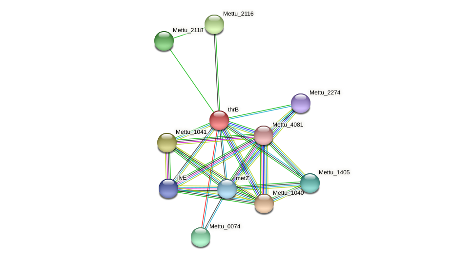 thrB protein (Methylobacter tundripaludum) - STRING interaction network