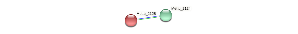 Mettu_2125 protein (Methylobacter tundripaludum) - STRING interaction network