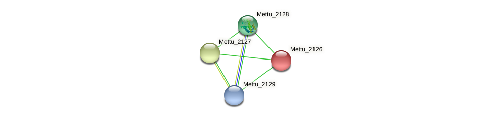 Mettu_2126 protein (Methylobacter tundripaludum) - STRING interaction network
