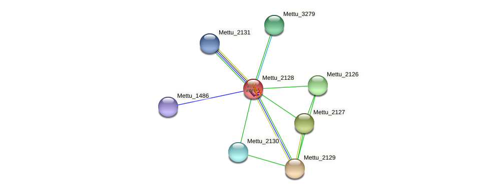Mettu_2128 protein (Methylobacter tundripaludum) - STRING interaction network