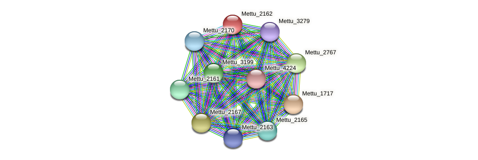 Mettu_2162 protein (Methylobacter tundripaludum) - STRING interaction network