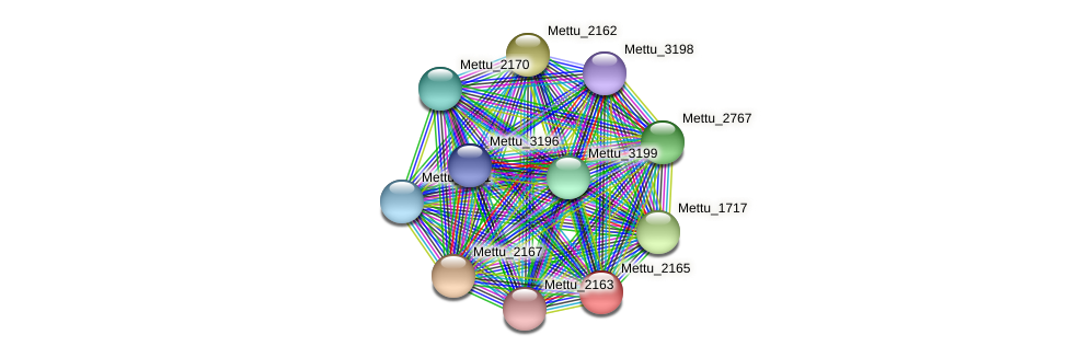 Mettu_2165 protein (Methylobacter tundripaludum) - STRING interaction network