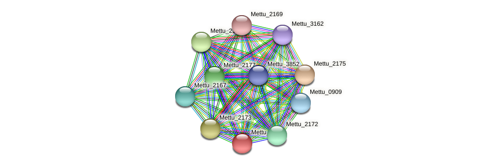 Mettu_2171 protein (Methylobacter tundripaludum) - STRING interaction network