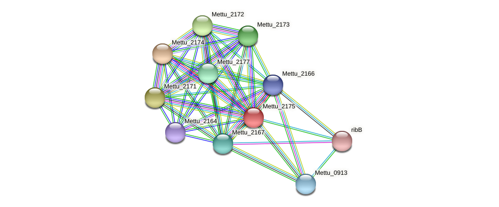 Mettu_2175 protein (Methylobacter tundripaludum) - STRING interaction network