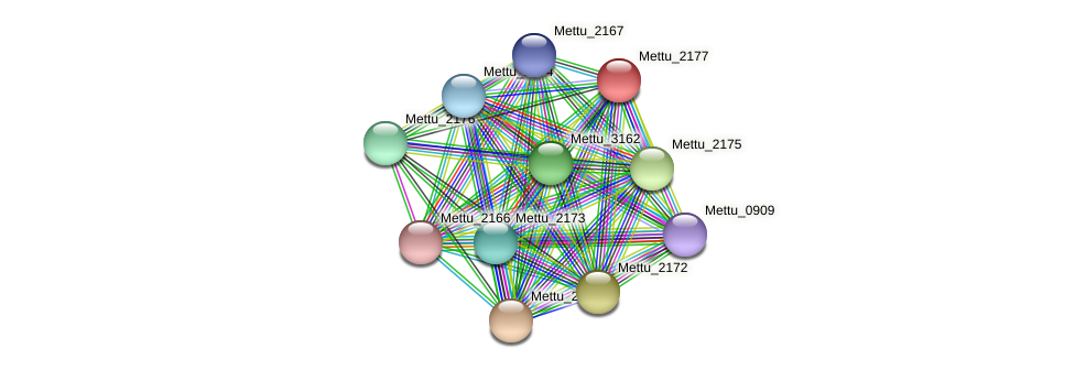 Mettu_2177 protein (Methylobacter tundripaludum) - STRING interaction network