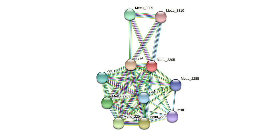 Mettu_2205 protein (Methylobacter tundripaludum) - STRING interaction network
