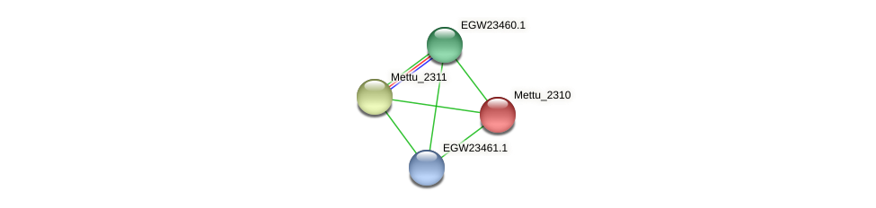 Mettu_2310 protein (Methylobacter tundripaludum) - STRING interaction network