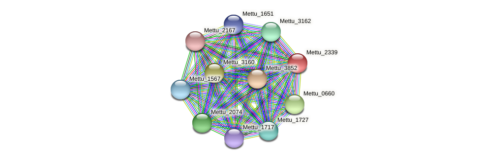 Mettu_2339 protein (Methylobacter tundripaludum) - STRING interaction network