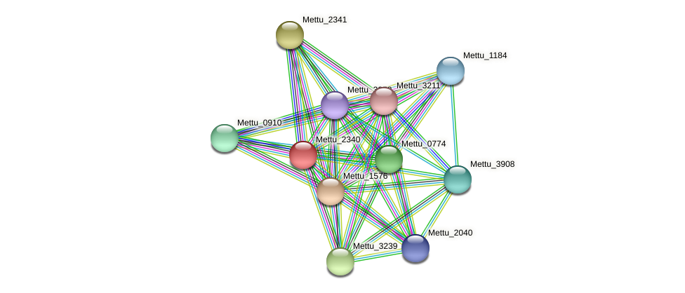 Mettu_2340 protein (Methylobacter tundripaludum) - STRING interaction network