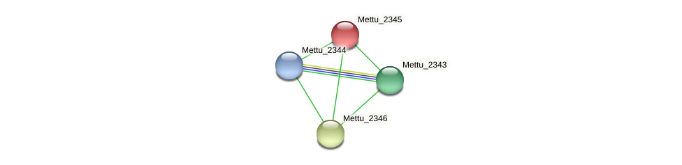 Mettu_2345 protein (Methylobacter tundripaludum) - STRING interaction network