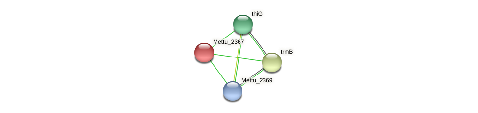 Mettu_2367 protein (Methylobacter tundripaludum) - STRING interaction network