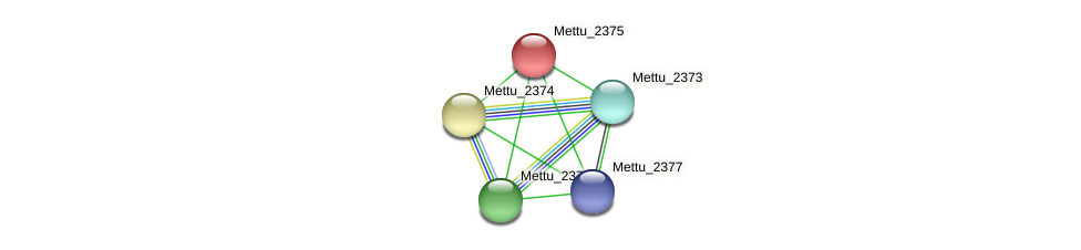 Mettu_2375 protein (Methylobacter tundripaludum) - STRING interaction network