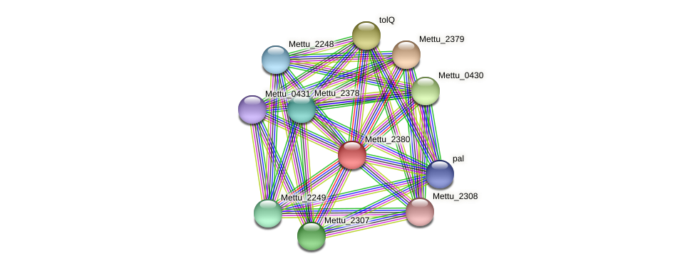 Mettu_2380 protein (Methylobacter tundripaludum) - STRING interaction network