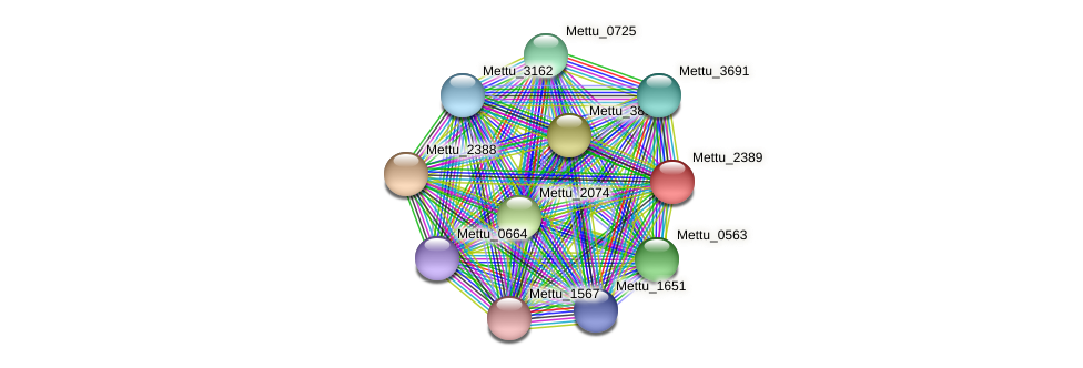 Mettu_2389 protein (Methylobacter tundripaludum) - STRING interaction network