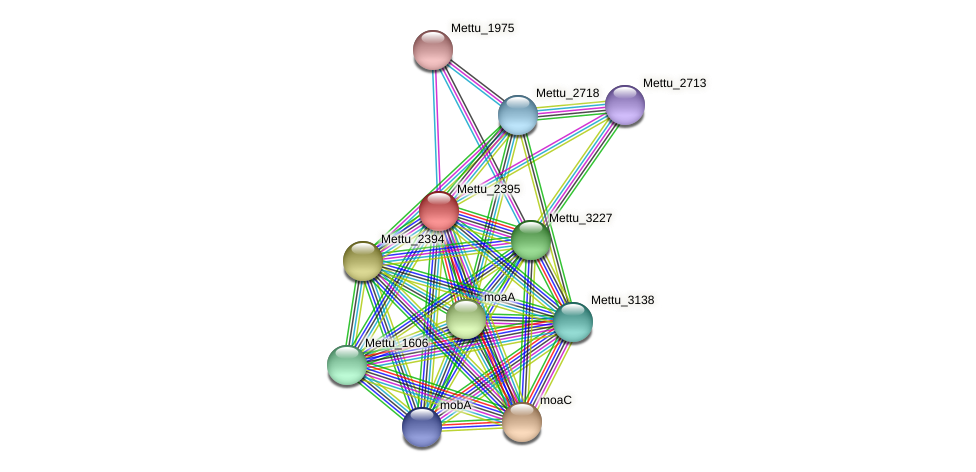 Mettu_2395 protein (Methylobacter tundripaludum) - STRING interaction network