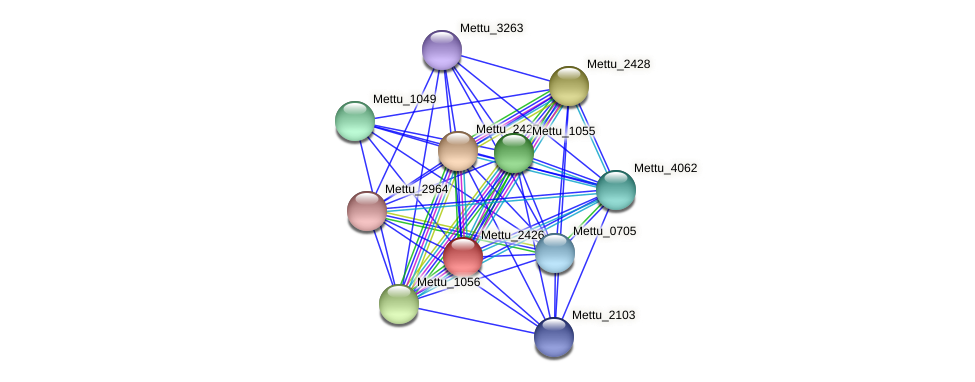 Mettu_2426 protein (Methylobacter tundripaludum) - STRING interaction network